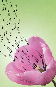 Schaum Recital Programs (Blank) #58: Musical Tulip